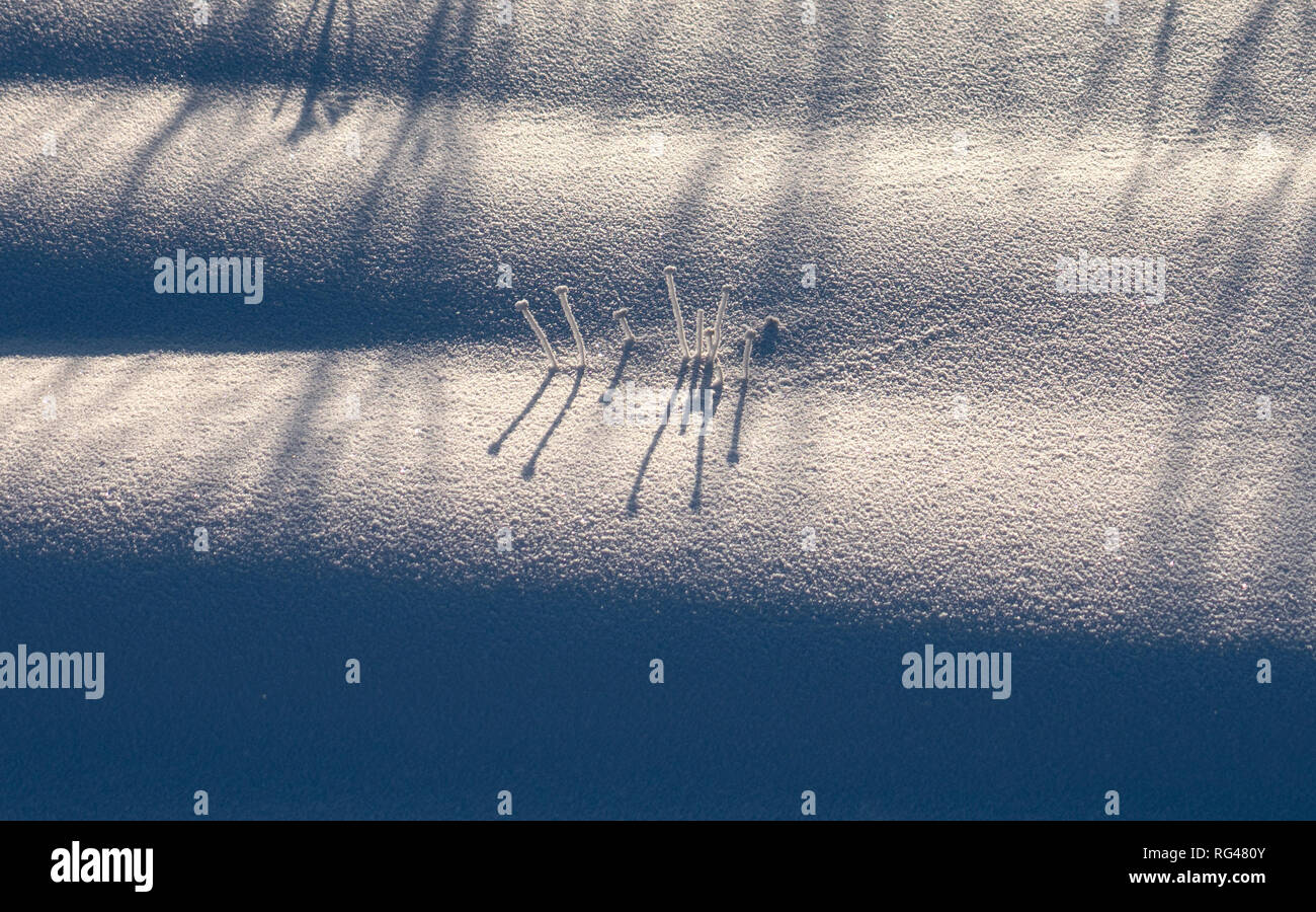 Abstract intricate figures cast a shadow and sticking out from under the snow, resembling either mushrooms or eyelashes - Stock Image