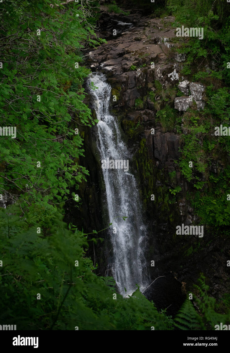 Leaves reaching out to grab a waterfall - Stock Image