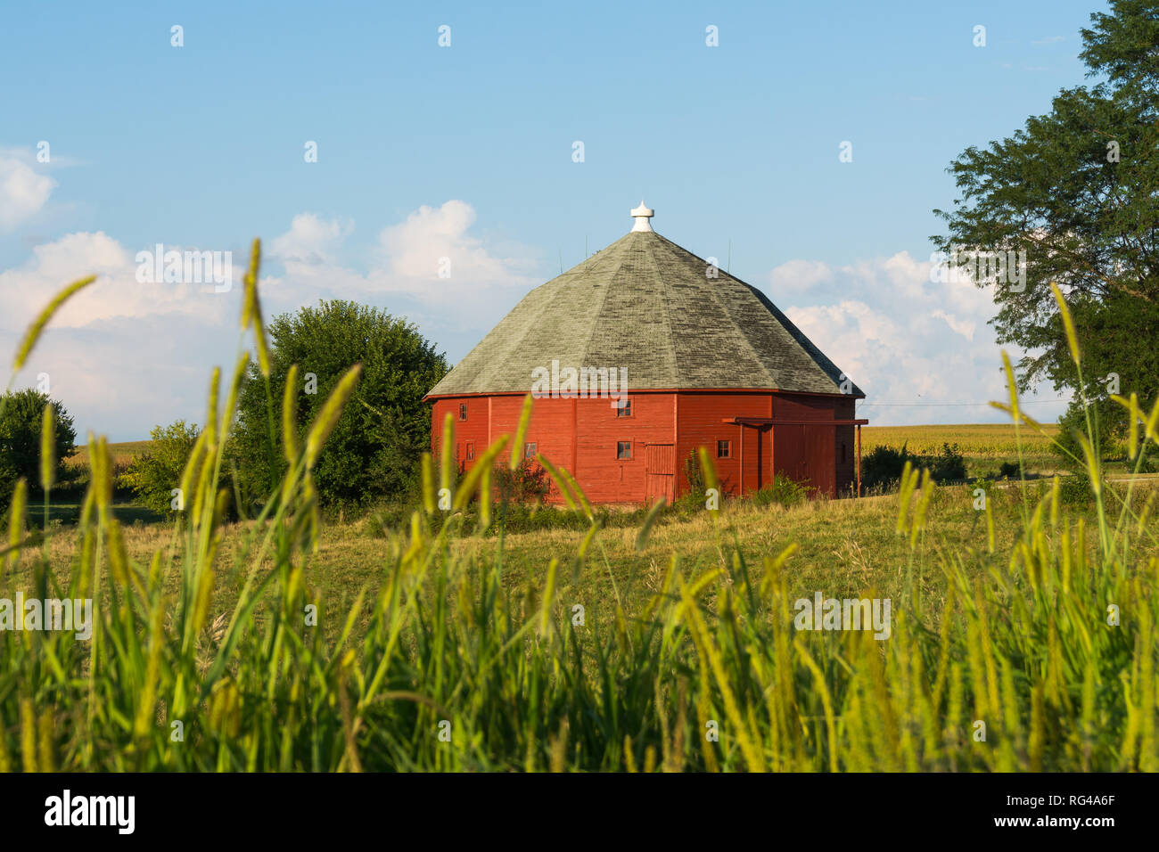 Red round barn through the tall grass on a Summer afternoon.  LaSalle County, Illinois, USA - Stock Image