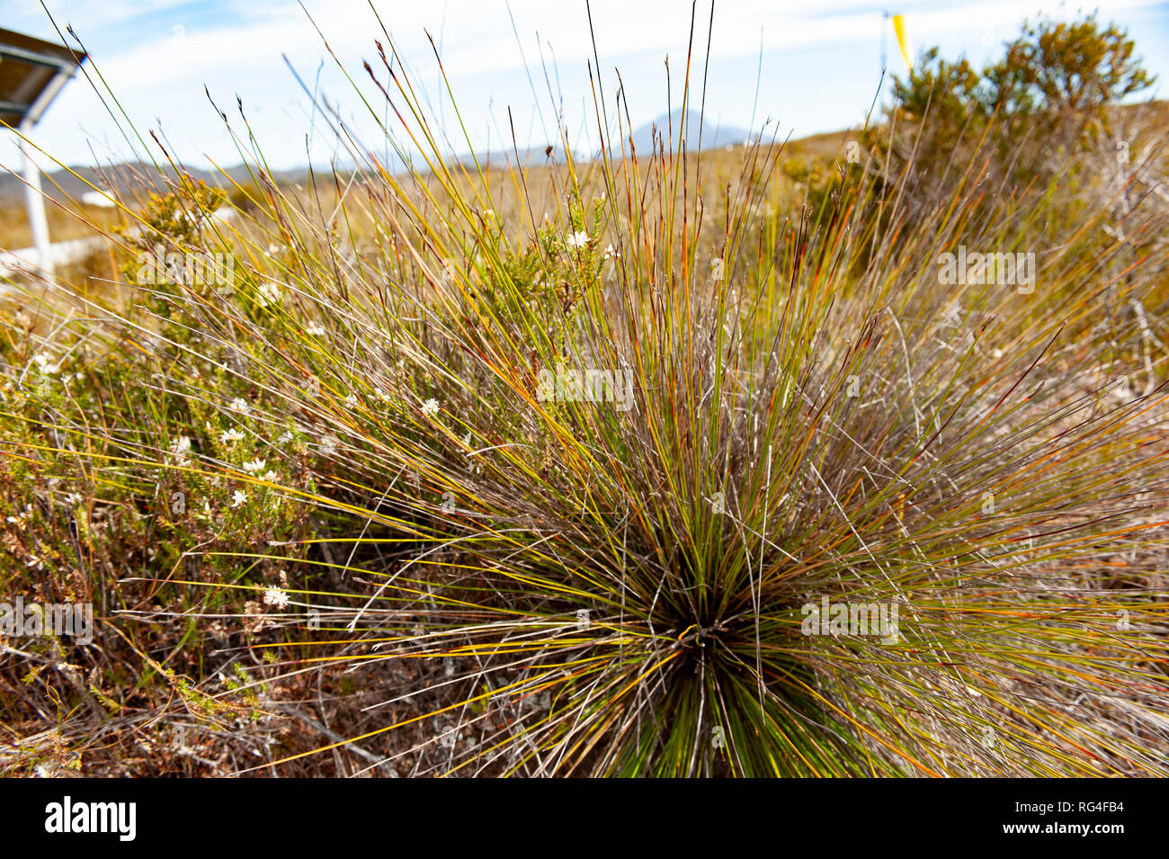 Vegetation, South West Tasmania, Australia Stock Photo
