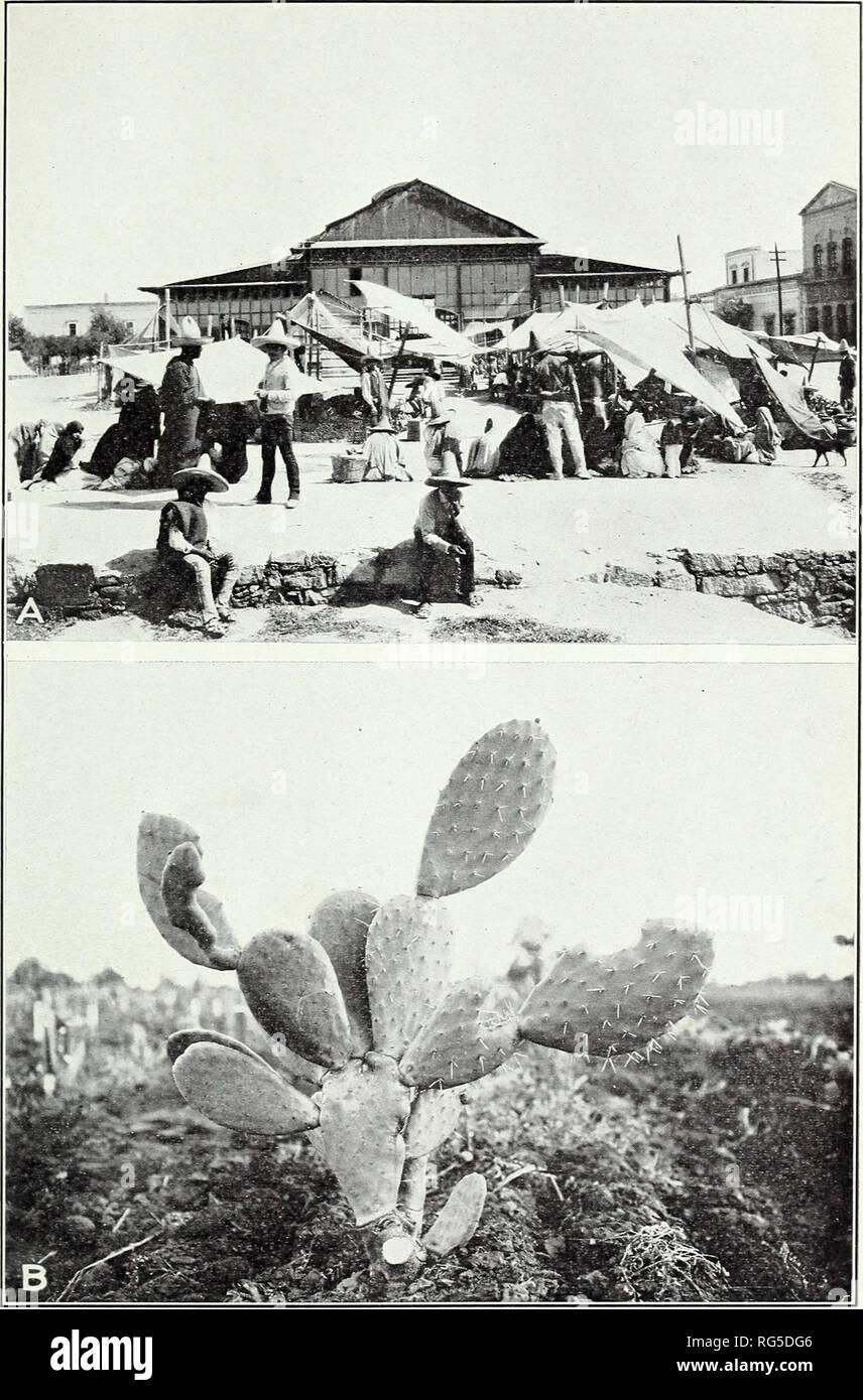 Frauen aus San Luis Potosi