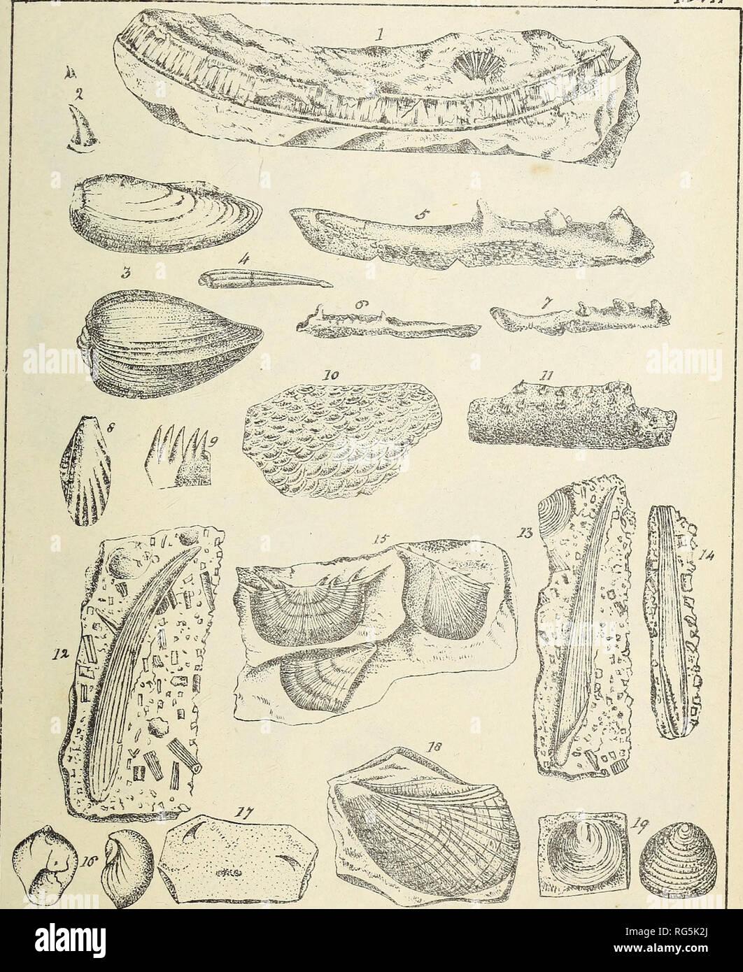 kulstof 14 er nyttigt til dating fossiler, der er