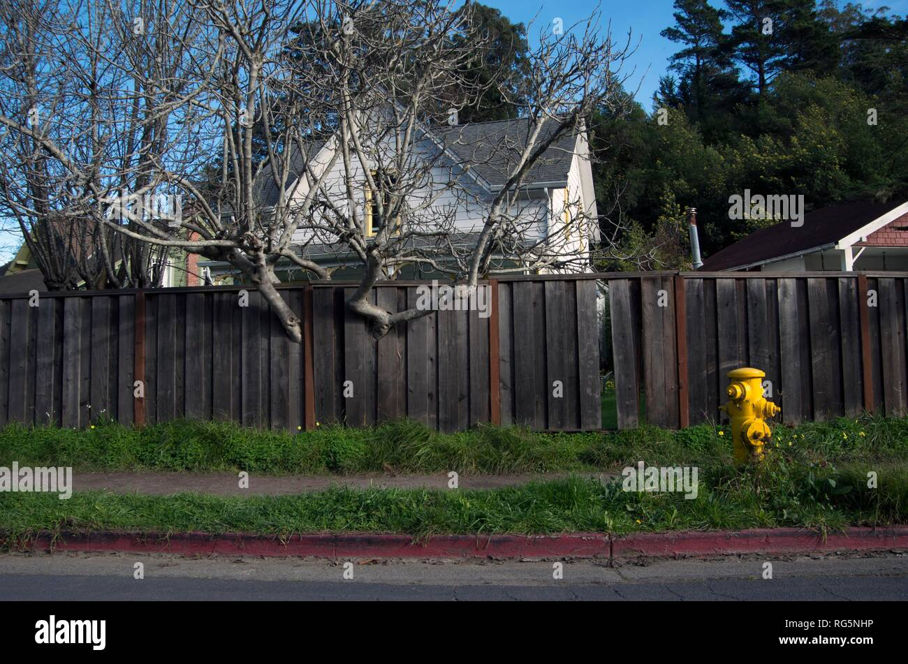 This homeowner built the fence around their yard around the tree, creating an interesting sight. - Stock Image