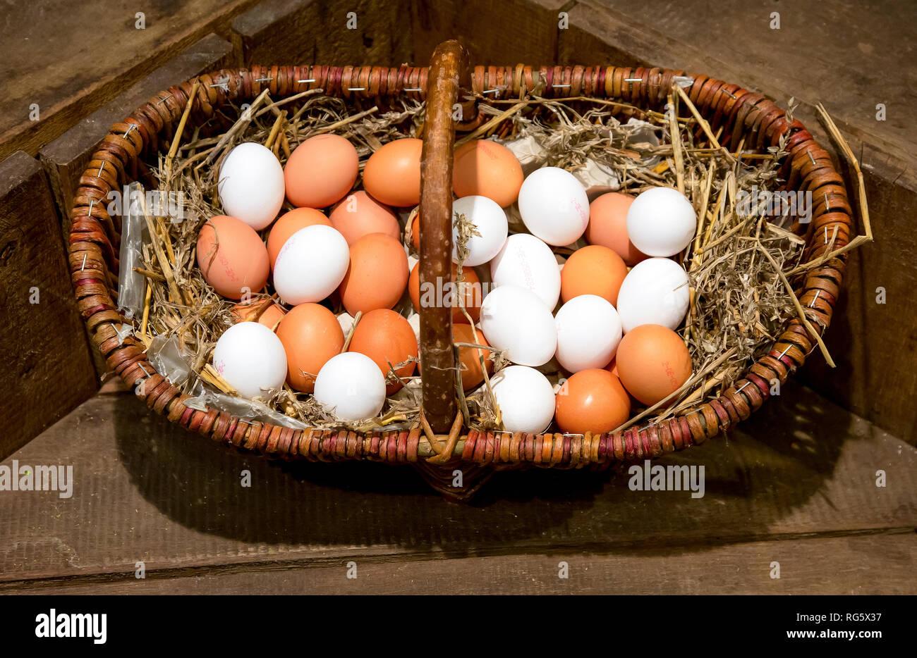 Brown and white eggs lying on straw in a wicker basket, farm shop, asparagus farm Schulte-Scherlebeck, Braune und weisse Eier liegen auf Stroh im Weid Stock Photo