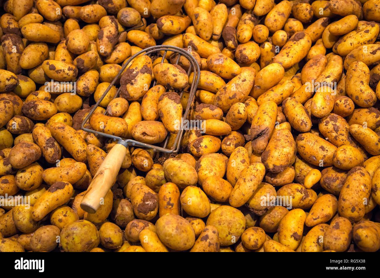 Potatoes, farm shop, asparagus yard Schulte-Scherlebeck, Kartoffeln, Hofladen, Spargelhof Schulte-Scherlebeck Stock Photo