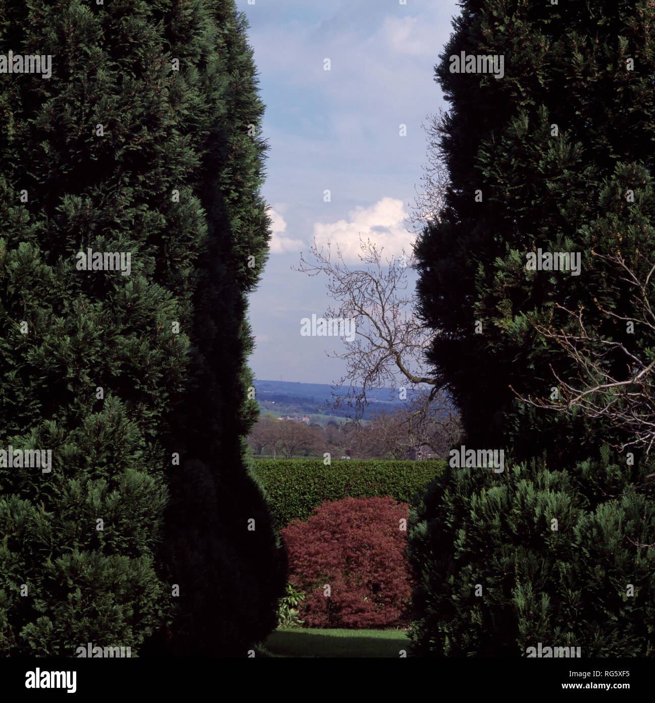 View through tall conifers of the English countryside - Stock Image