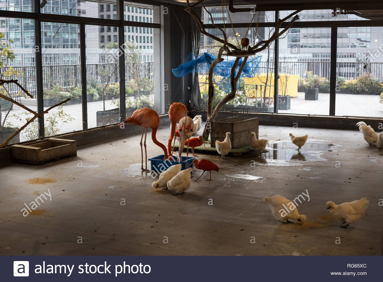 inside a pasona building on a winter day. - Stock Image