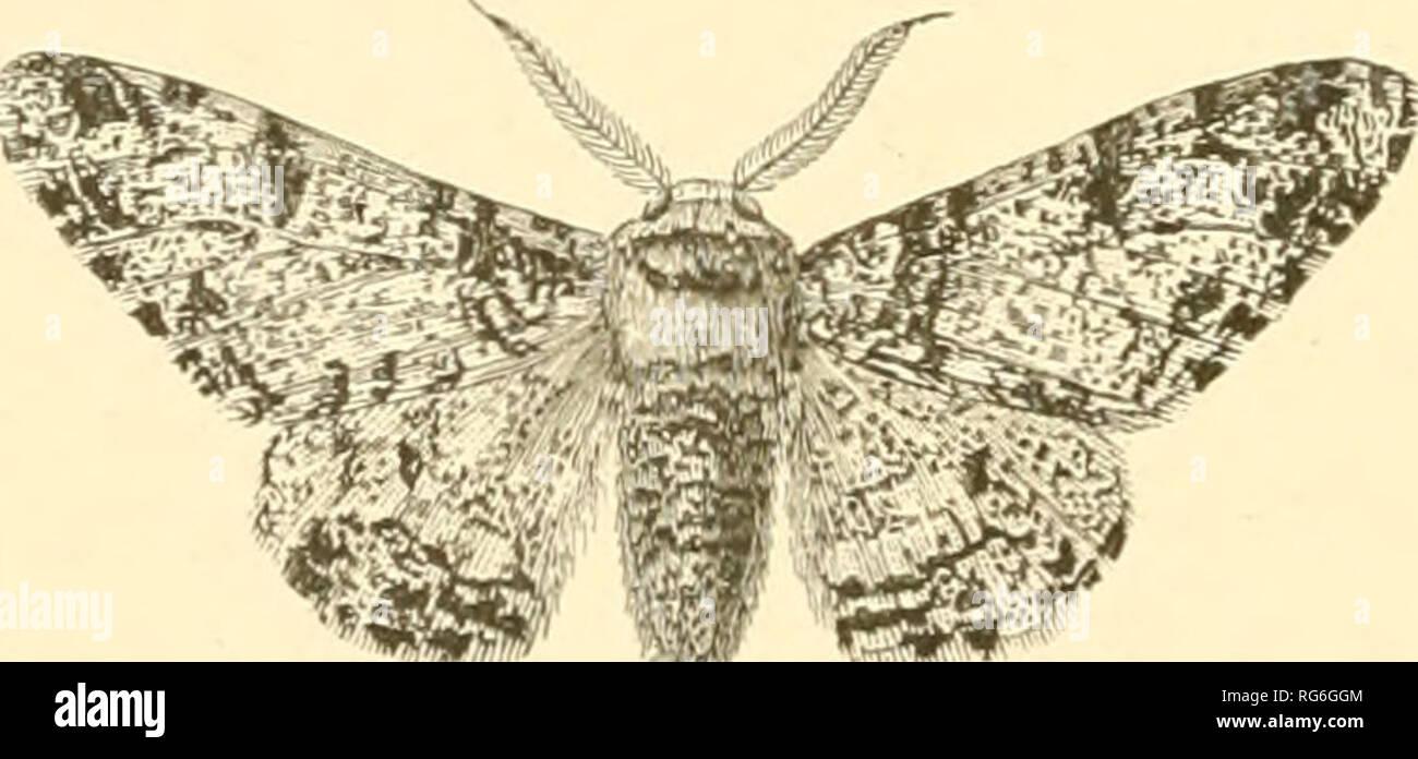 Butterflies and moths (British)  Butterflies