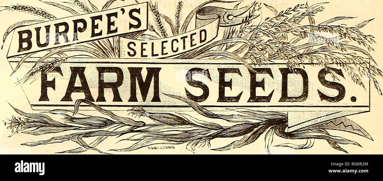 1fef259076bb ... stock Pennsylvania Philadelphia Catalogs; Flowers Catalogs; Vegetables  Catalogs; Seeds Catalogs. We devote careful attention to the growth and  selection ...