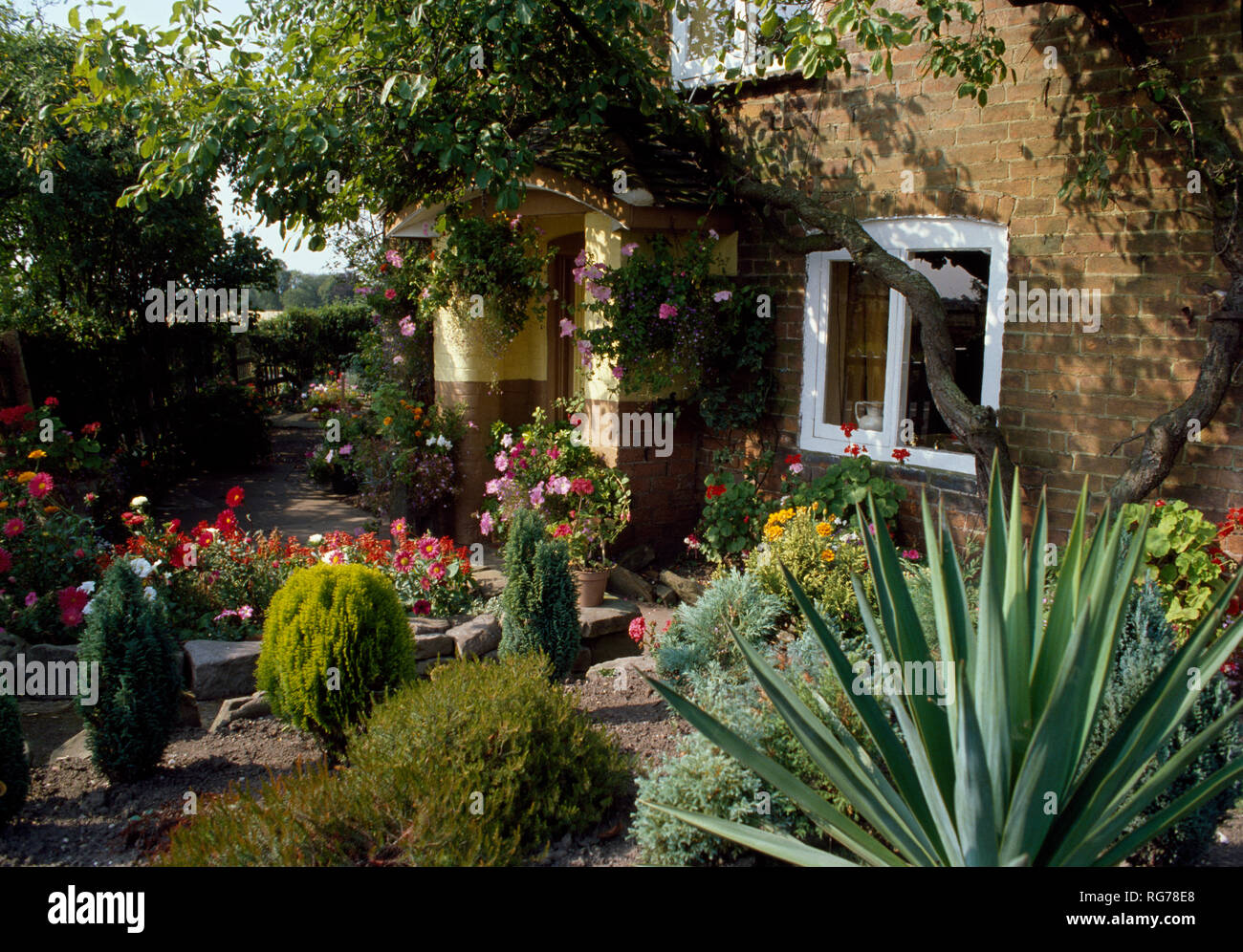 Agave and dwarf conifers in small garden of country cottage - Stock Image