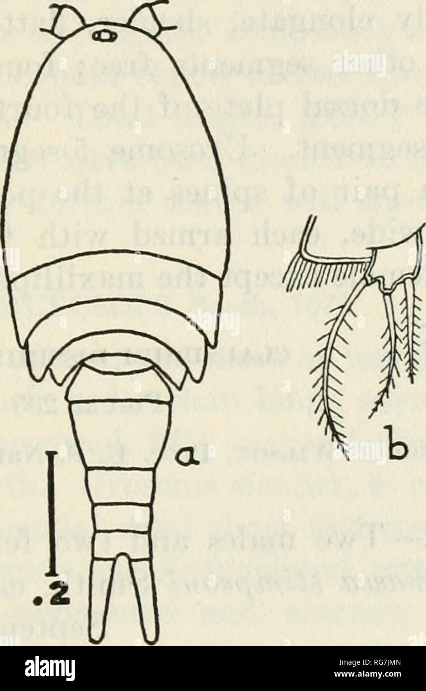 """. Bulletin - United States National Museum. Science. COPEPODS OF THE WOODS HOLE REGION"""" 343 Distributimi.—Russia (Fischer); Sweden (Lilljeborg); Germany (Vosseler, Schmeil); Poland (Lande); Norway (Sars); France (Richard) ; Bohemia (Fric) ; Turkestan (Uljanin) ; British Isles (Brady, Scott) ; Hungary (Daday); United States (Forbes); Min- nesota (Herrick); Ohio (Turner) ; Nantucket Island (Forbes). Color.—Body rather opaque and light brown, with red oil globules scattered through the metasome; eye bright red; eggs violet or purple. Femal&.—Metasome elliptical, a little more than half a Stock Photo"""