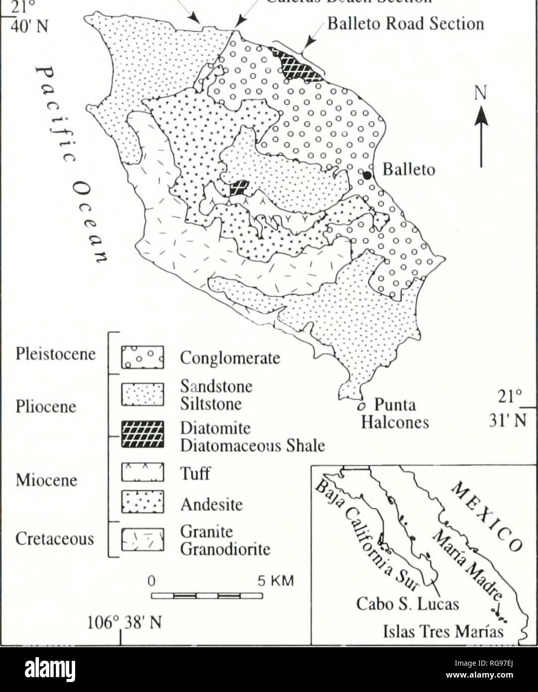 . Bulletins of American paleontology. Baja California Stratigraphy: Carreno and Smith 103 for differences in sediment composition between the vertebrate-bearing rocks and those farther north, but detailed mapping and sedimentological studies are needed. Concliilioii Espinosa-Arrubarrena (1979) correlated the beds at Rancho Algodones with the Tirabuzon Formation of the Boleo basin on the basis of shark teeth. Moliuscan fossils from unnamed, reworked, marine sediments of the southern Cabo Trough also include a number of ta.xa in common with the late Middle to Late Miocene section at southwestern - Stock Image