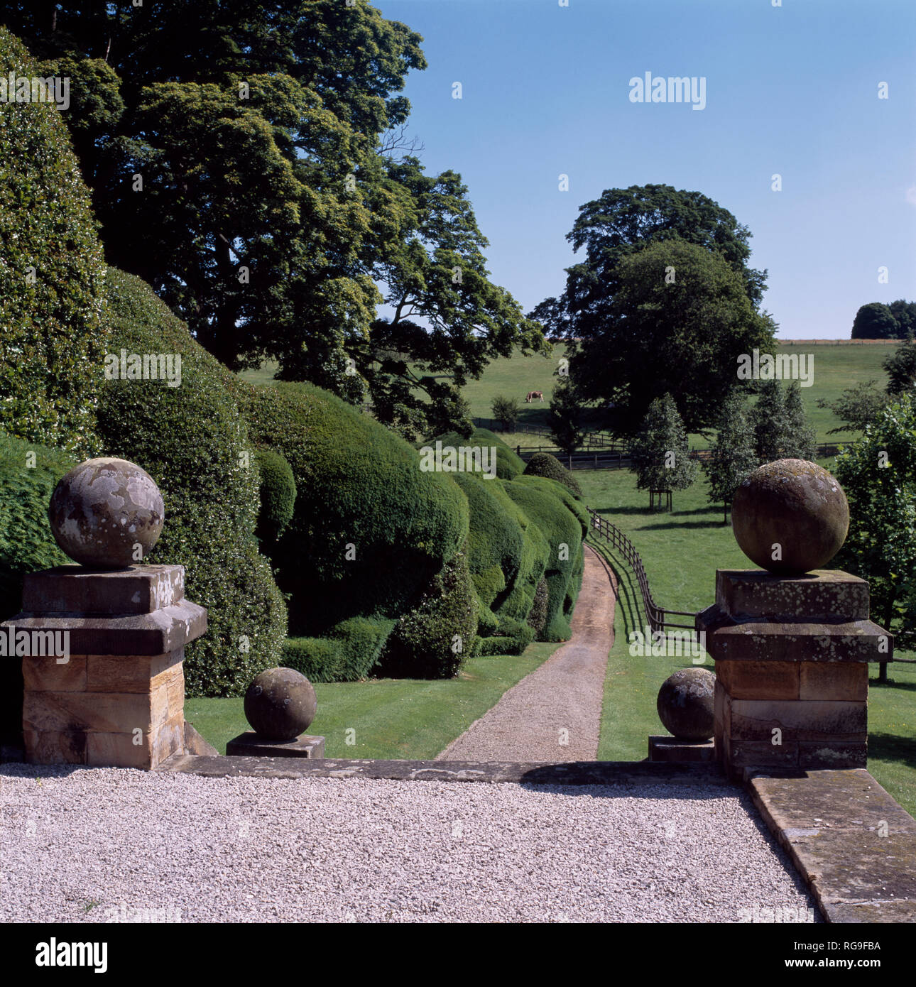 Stone balls on plinths beside wide rounded topiary hedge and drive - Stock Image
