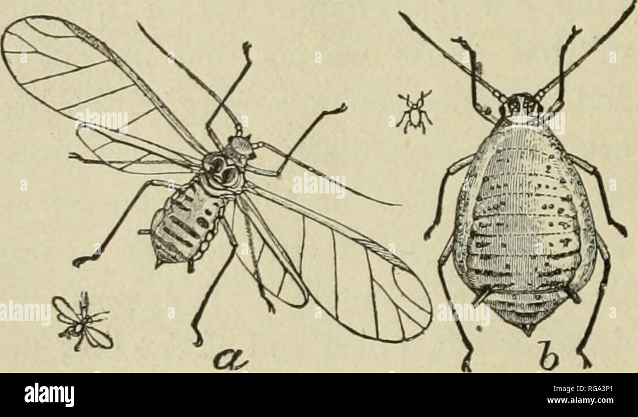 Wingless Insects Stock Photos & Wingless Insects Stock