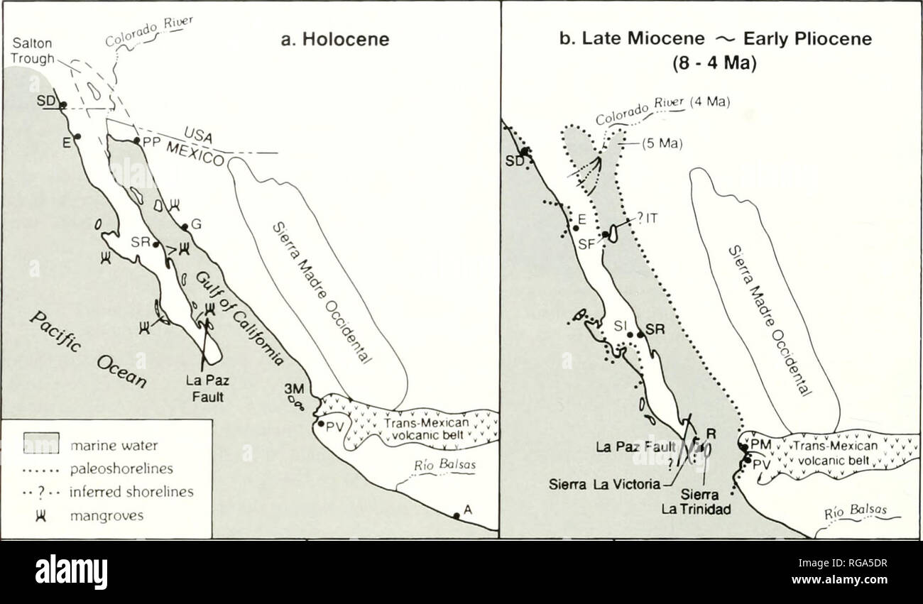 . Bulletins of American paleontology. 54 Bulletin 371. c. Middle Miocene - early Late Miocene (15-8 Ma) SGP VPM Arroyo La Trinidad -^/^ Sierra La Trinidad d. Early - early Middle Miocene (23.7-15 Ma) e. Late Oligocene (30 - 23.7 Ma). Please note that these images are extracted from scanned page images that may have been digitally enhanced for readability - coloration and appearance of these illustrations may not perfectly resemble the original work.. Paleontological Research Institution (Ithaca, N. Y. ); Columbia University. Ithaca, N. Y. , Paleontological Research Institution [etc. ] - Stock Image
