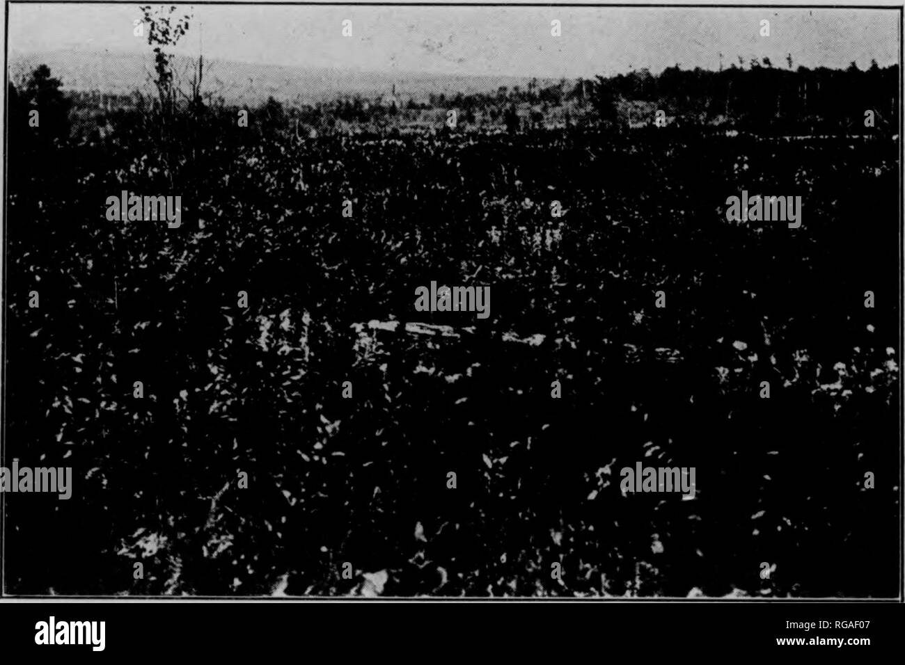 . Bulletin (Pennsylvania Department of Forestry), no. 14-16. Forests and forestry. Photo by Geo. H. Wirt. Fig. 3. AREA OF BRACKEN AND WEEDS. Now waste land. It once produced the best of timber. This land should be planted, iw-^ A:  , ..y-,.f Fig. 4. BRUSH LAND. Reproducing nothing of value. The brush was subsequently burned and the area planted with white pine, Norway spruce, and Scotch pine. 11 Class I. Areas originally farmed but which have proved unsuit- able for agricultural purposes. Land in this class may be found in all parts of Pennsylvania, especially on steep slopes. Class II. Farm  - Stock Image