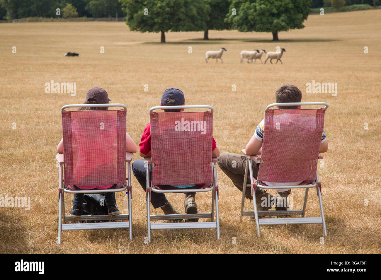 Three young men in deck-chairs watch the Sheep Dog trials at Hambleden near Henley-on-thames, Oxfordshire - Stock Image