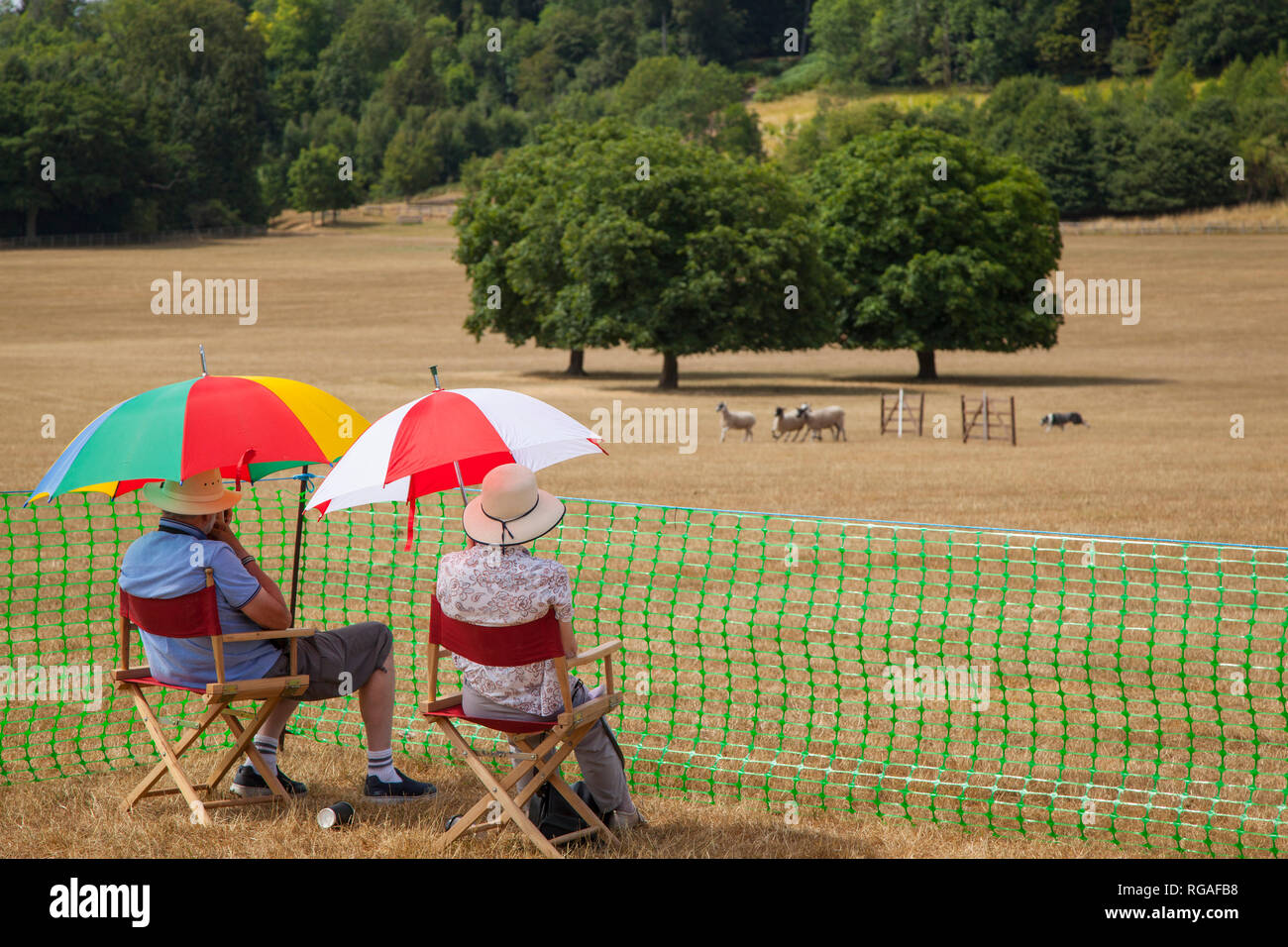 A couple enjoy the sheep dog trials under colourful umbrellas near Hambleden, Buckinghamshire, part of the Henley Show. - Stock Image