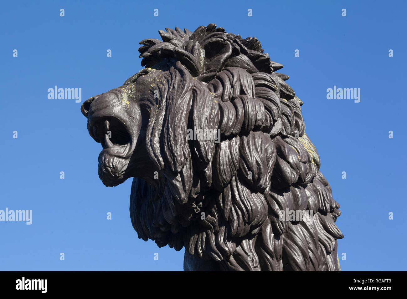 The head of the bronze statue of the Forbury Lion in Forbury Gardens, Reading, Berkshire Stock Photo
