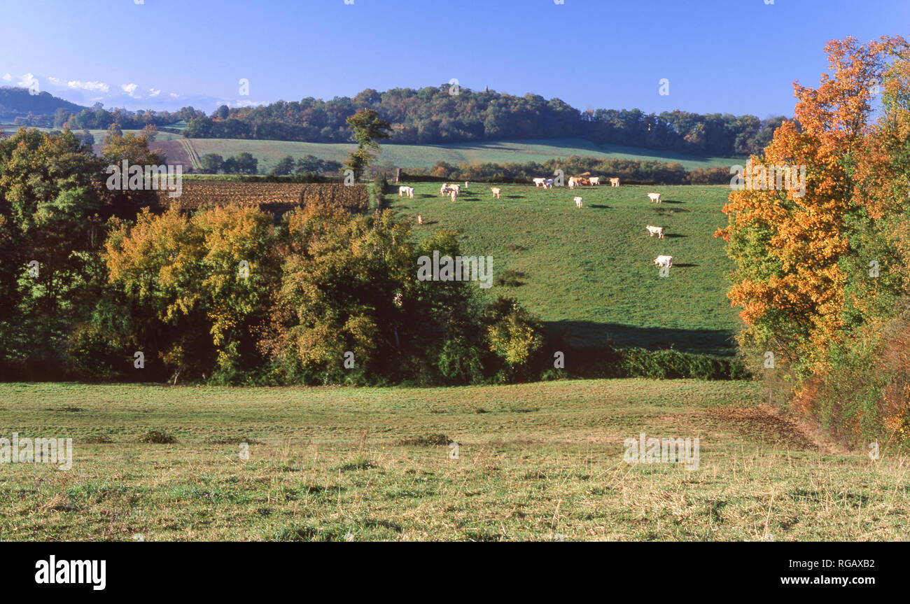 Southwest France.In the foothills of the French Pyrenees,near Lourdes, in early autumn. - Stock Image