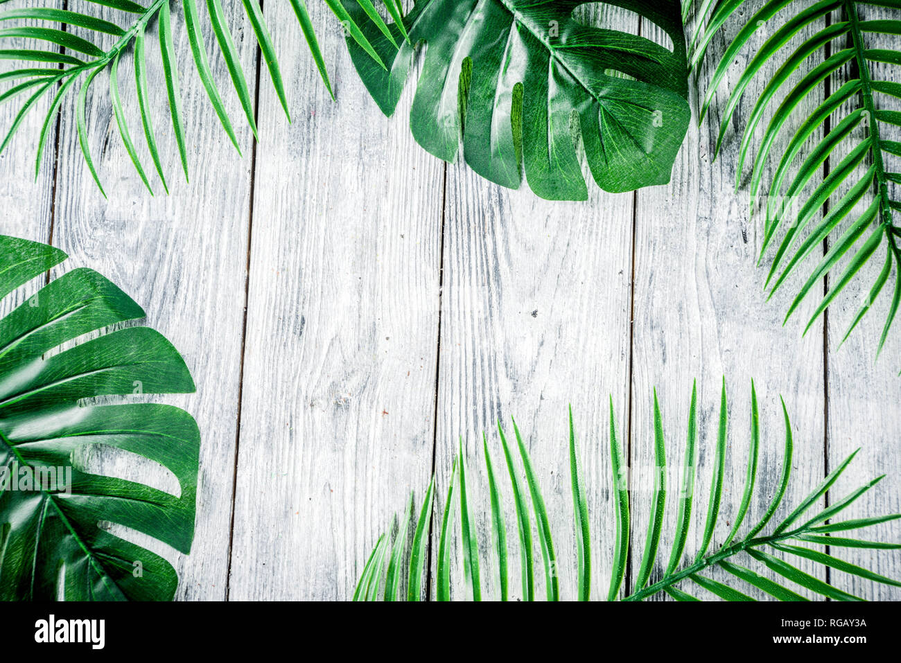 Tropical Background Palm And Monstera Leaves On Wooden Grey Background Flatlay Top View Minimal Layout Summer Concept Stock Photo Alamy Polish your personal project or design with these tropical. https www alamy com tropical background palm and monstera leaves on wooden grey background flatlay top view minimal layout summer concept image233810062 html