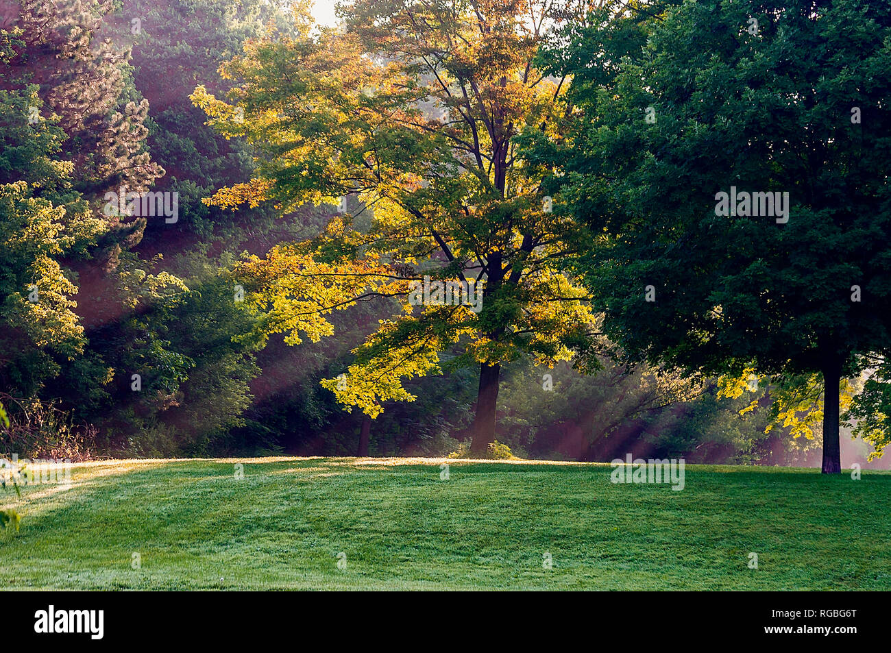 Early morning light streams through trees in a park, Ontario, Canada - Stock Image