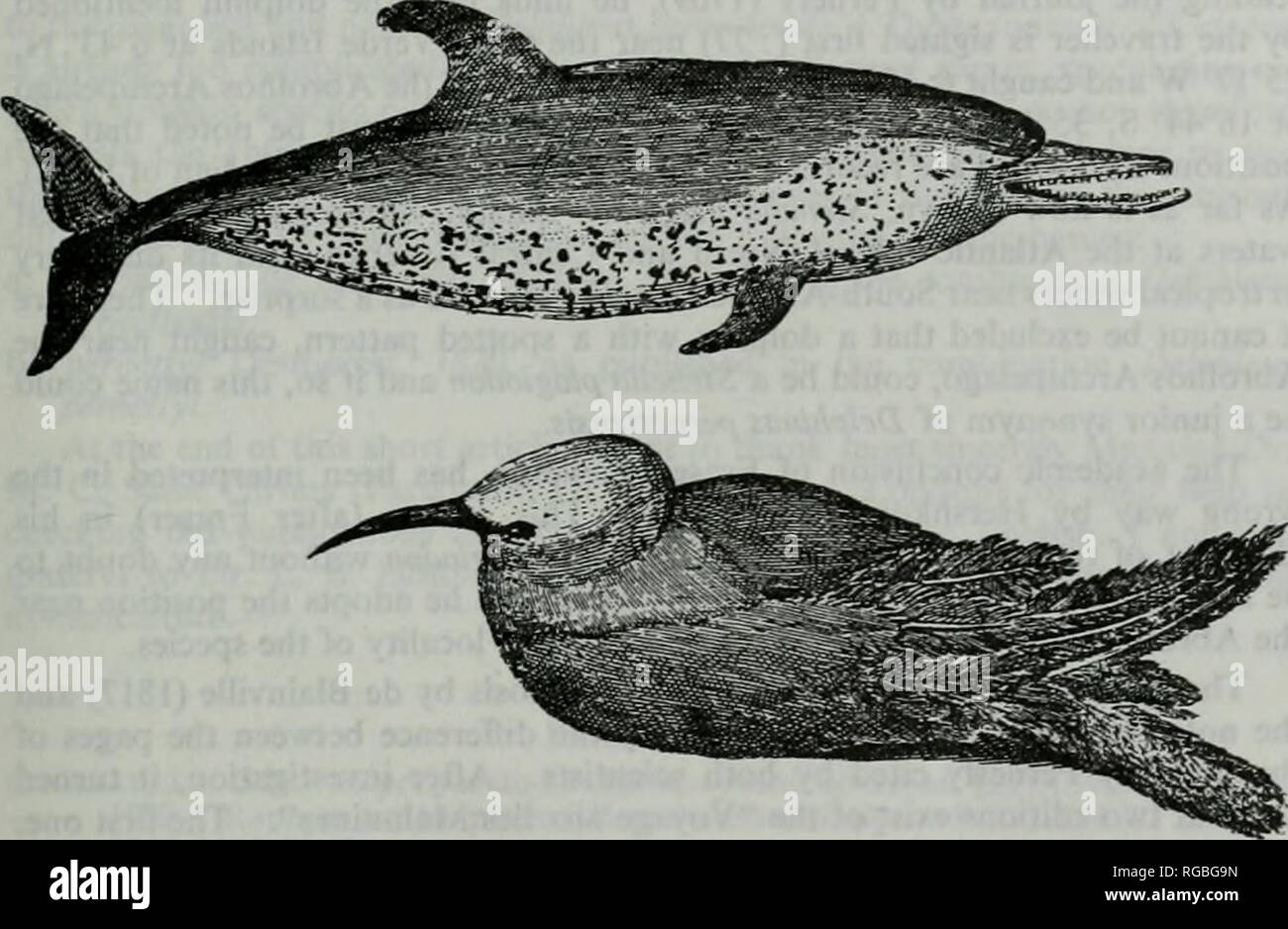 ". Bulletin of zoological nomenclature. Bulletin of Zoological Nomenclature 45 In another publication, two years later, Desmarest (1820 : 513) changed the name and called the species Delphinus Pernettyi. He did not indicate clearly he considered his spelling the right one, so in fact ""pernettyi"" is an incorrect subsequent spelling and therefore nomenclatorially non-existent. But even if we accept that Desmarest intended to correct the name, then it is an unjustified emendation and that thereby the name pernettyi has become a junior objective synonym of pernettensis.. Fig. 1. Delphinus - Stock Image"