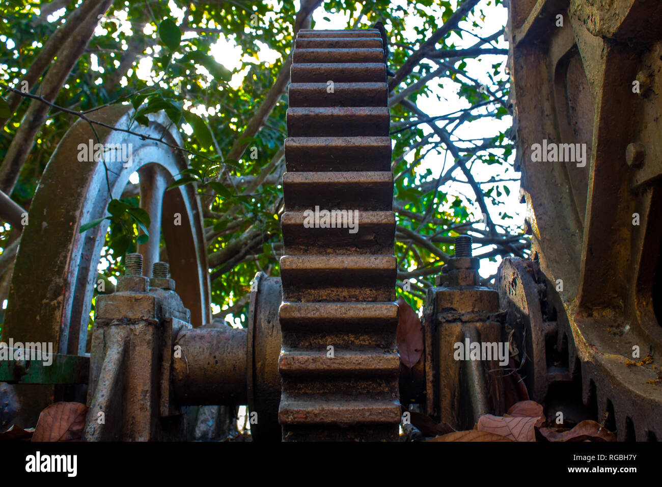 Gears or gears of rusty metal left unused, old sugar cane milling - Stock Image