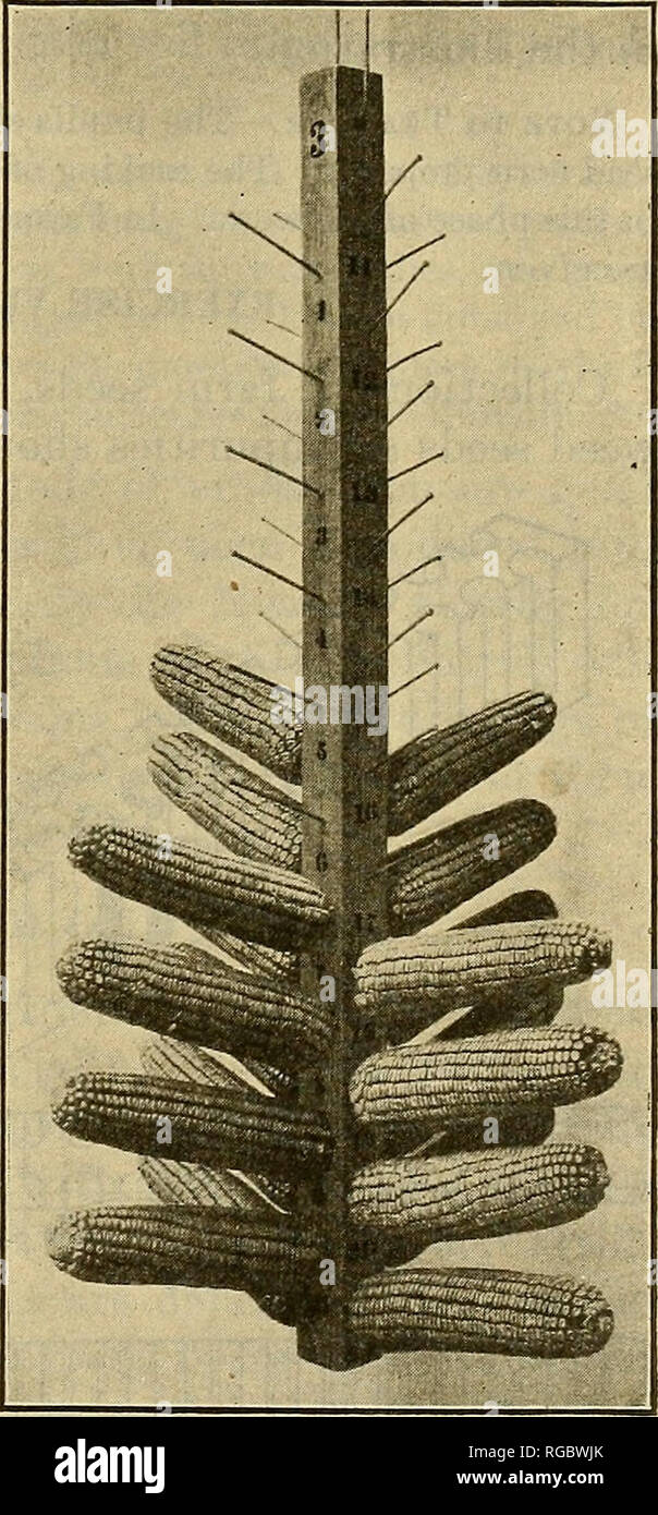 Corn Shaped Stock Photos & Corn Shaped Stock Images - Page 3