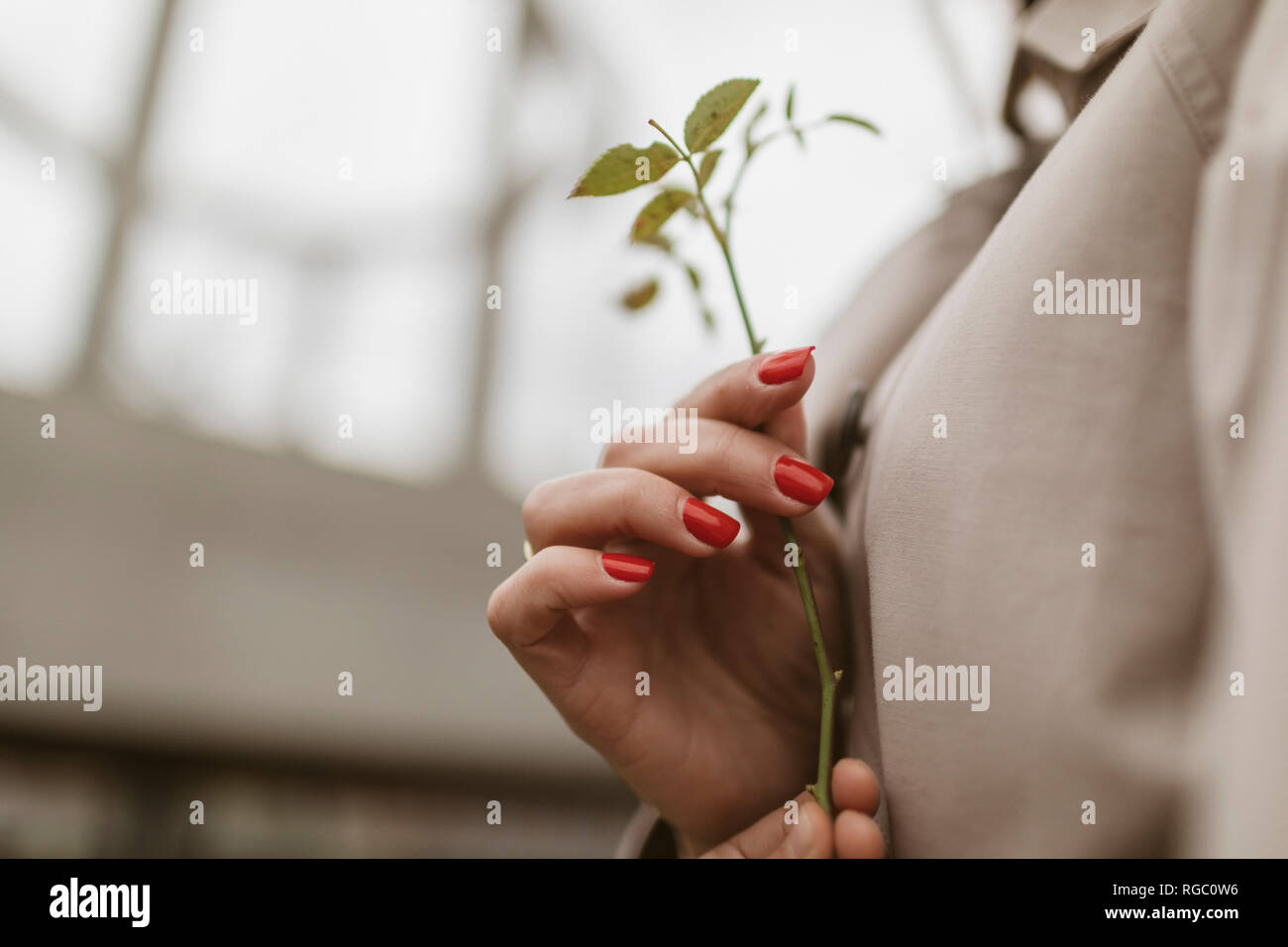 Hands holding twig, close-up - Stock Image