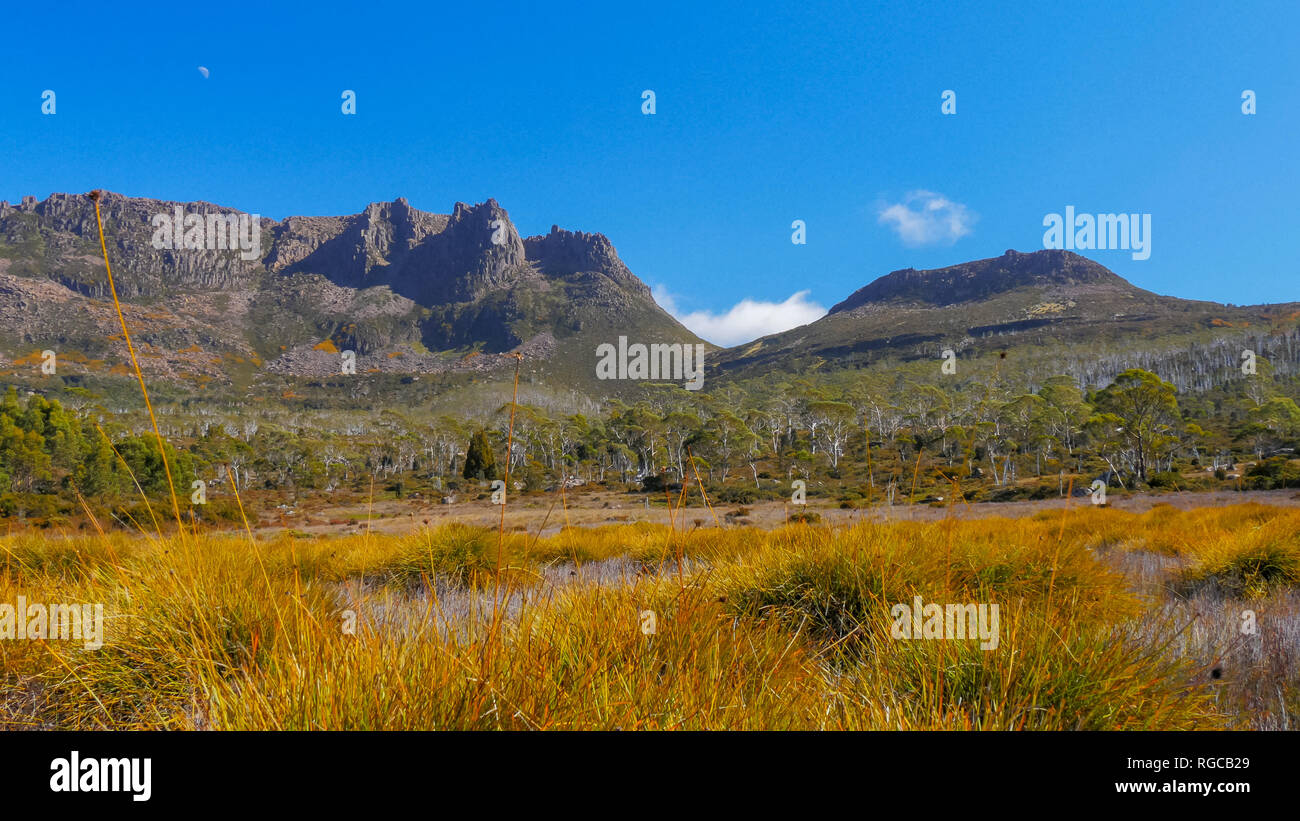 mt ossa and buttongrass plants on the overland track in cradle mountain national park, australia - Stock Image