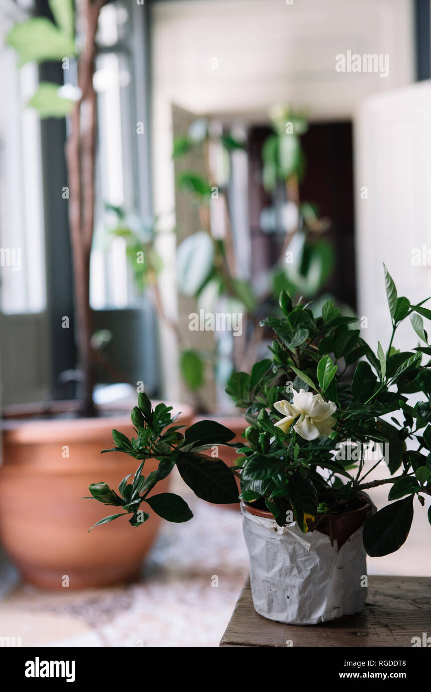 Potted plants for a table decoration - Stock Image