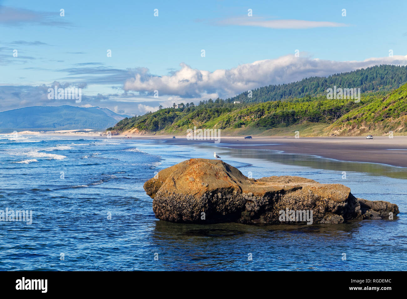 43,362.02366 ocean beach landscape seascape shoreline green conifer forest, boulder in water with Western seagull bird standing on top, blue water sky - Stock Image