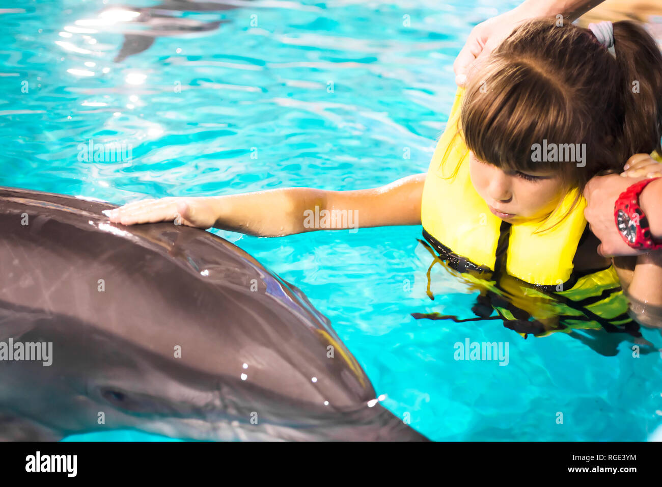 little girl swimming with the dolphins in the night pool Stock Photo