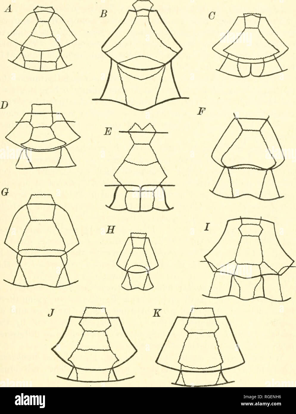 . Bulletin of the Museum of Comparative Zoology at Harvard College. Zoology. LOVEBIDGE AND WILLIAMS: AFRICAN CRYPTODIRA 217. Fig. 12. Pygal patterns in testudinids (diagrammatic). A, Clemmys caspica leprosa (Pygal pattern differs within the genus Clemmys as cur- rently recognized) ; B, Geochelone pardalis babcocki; C, Emys orbicularis; D, Testudo graeca graeca; E, Malacochersus tornieri; F, Psammobates ten- torius tentorius; G, Chersina angulata; H. Uomopiis signatus; I, Kinixys erosa; J, Aeinixys planicauOa; K, Pyxis arachnoides. (P. Washer del.). Please note that these images are extracted f - Stock Image