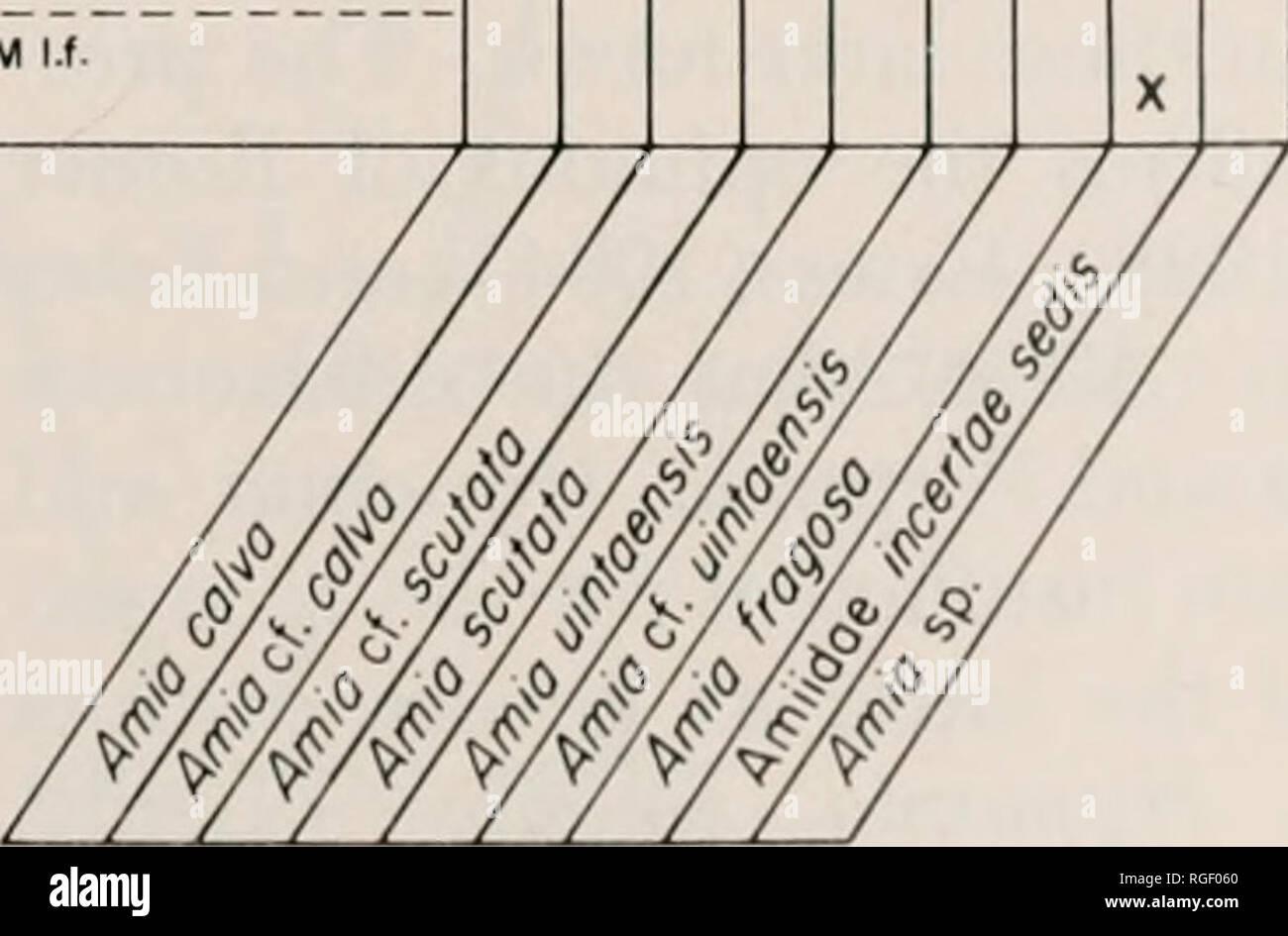 . Bulletin of the Museum of Comparative Zoology at Harvard College. Zoology. Fossil Amiids • Boreske 77 PLEISTOCENE PLIOCENE POST-BLANCAN BLANCAN- HEMPHILLIAN CLARENOONIAN FOSSIL LAKE BEOS (lOAHO FM.) WAKEENEY It. (OGALLALA FM.) LOWER VALENTINE FM. BARSTOVIAN MIOCENE HEMINGFORDIAN ARIKAREEAN EUBANKS l.f. (PAWNEE CREEK FM.) TURTLE BUTTE FM. WHITNEYAN OLIGOCENE ORELLAN CHAORONIAN RUBY PAPER SHALE (PASSAMARl FM.) GRANT HORSE PRAIRIE SHALE FLORISSANT FM. ORELLA MEMBER (BRULE FM.) CHADRON FM. CYPRESS HILLS FM. OUCHESNEAN EOCENE UINTAN BRIDGERIAN WASATCHIAN CLARNO FM. HORSEFLY RIVER BEDS UINTA FM. W - Stock Image