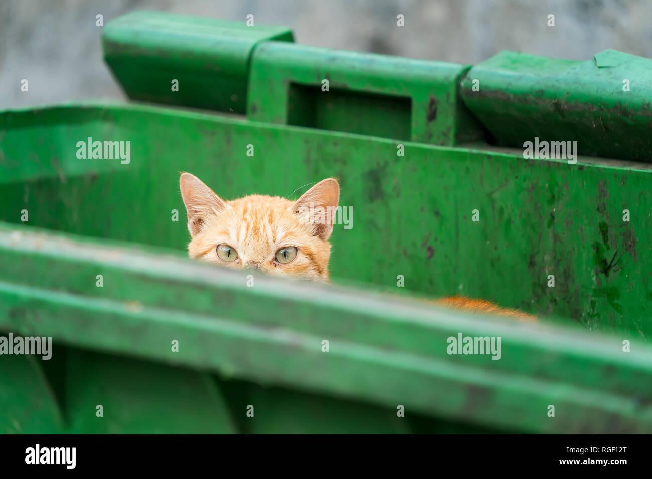 Funny cat hiding in recycler bin - Stock Image