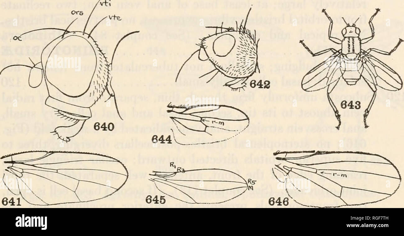 . Bulletin of the Museum of Comparative Zoology at Harvard College. Zoology. BRUES AND MELANDER: CLASSIFICATION OF INSECTS 337 Cosmopolitan, dung flies. (Borborus (=Cypsela), Scatophora ( = Olina), Sphserocera (Fig. 643)). {CYPSELWM, SPHM- ROCERIDM) BORBORIDiE Hind metatarsi not short and thick 117 117. Postvertical bristles converging, presutural dorsocentral bristle present, fronto-orbital bristles directed outward, interfrontal cross-bristles usually present, one sternopleural bristle. (If. Figs. 640-646. Pallopteridse, Lonchaeidae, Thyreophoridae, Borboridse, Leptoceratidae, Astiidse, Cana - Stock Image