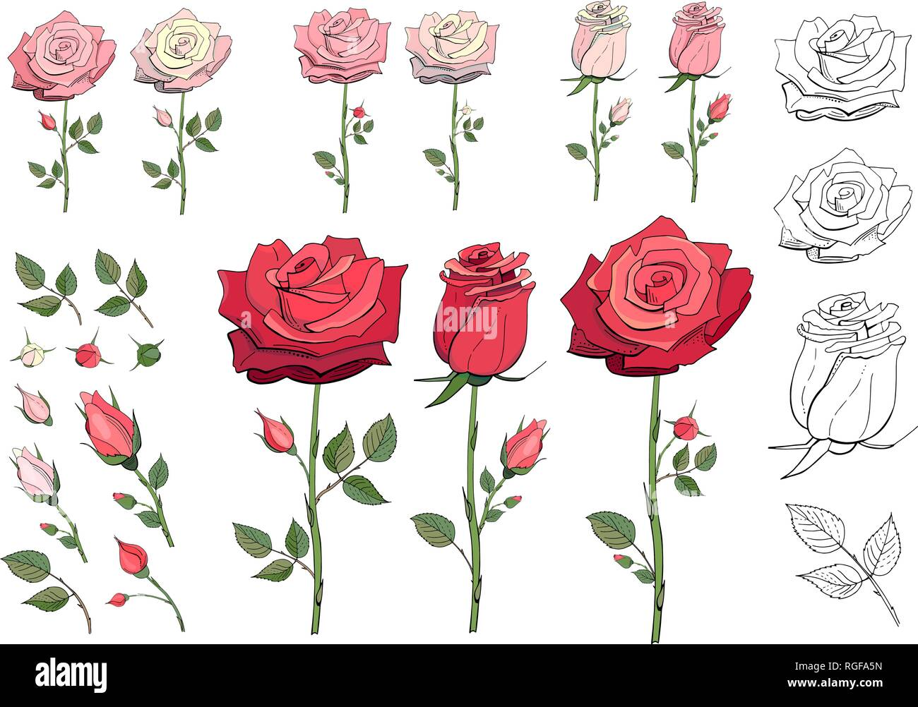 Set of floral elements. Red, pink, white roses. Objects isolated on a white background. Vector illustration EPS 10 file - Stock Image
