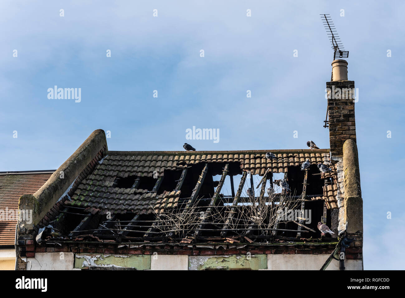 Old decaying building. Collapsed roof of an old building with pigeons in the loft space. Skeleton of roof timbers of house, dwelling. Space for copy - Stock Image