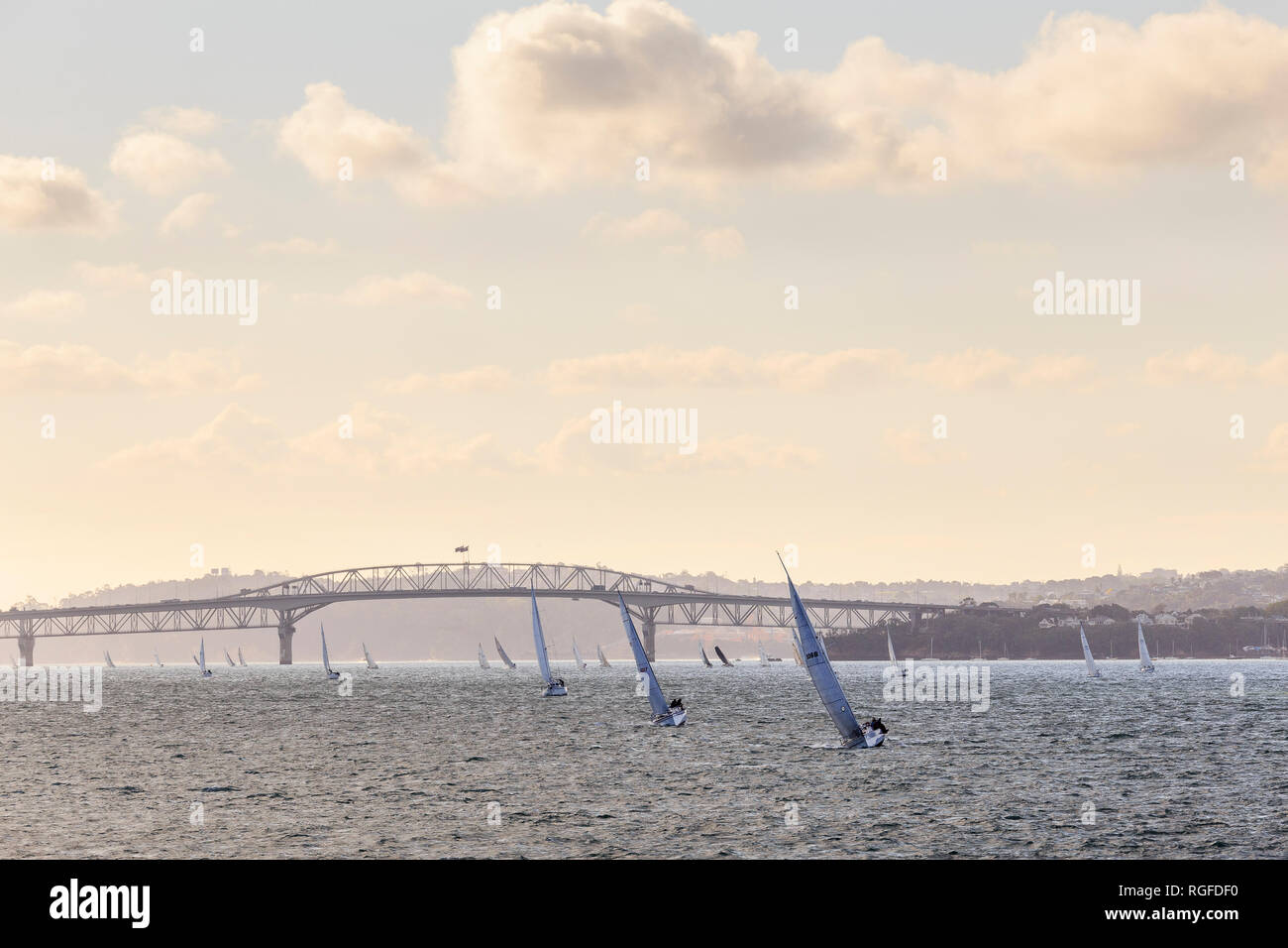 Many sailing boats at dusk in Auckland Harbour, with Auckland Harbour Bridge in the background. - Stock Image