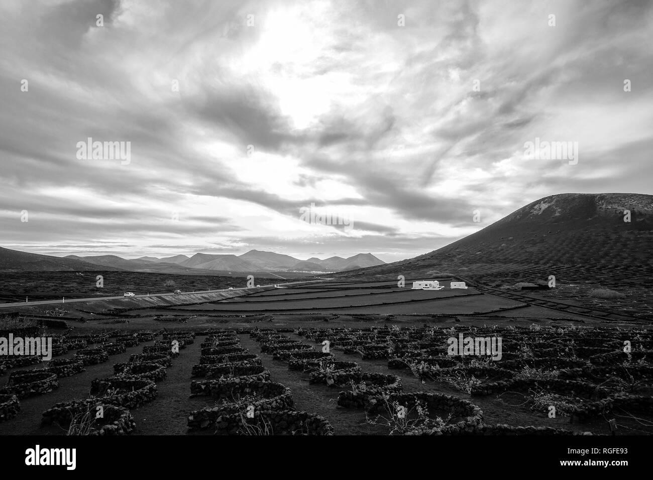 Wine-growing region of La Geria. - Stock Image