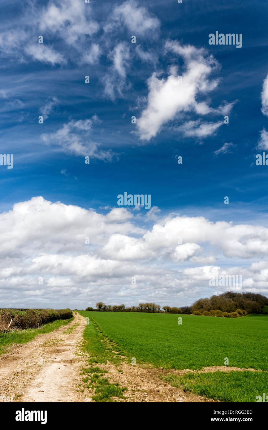 Salisbury Plain Wiltshire an area of chalk downland used for arable farming. - Stock Image