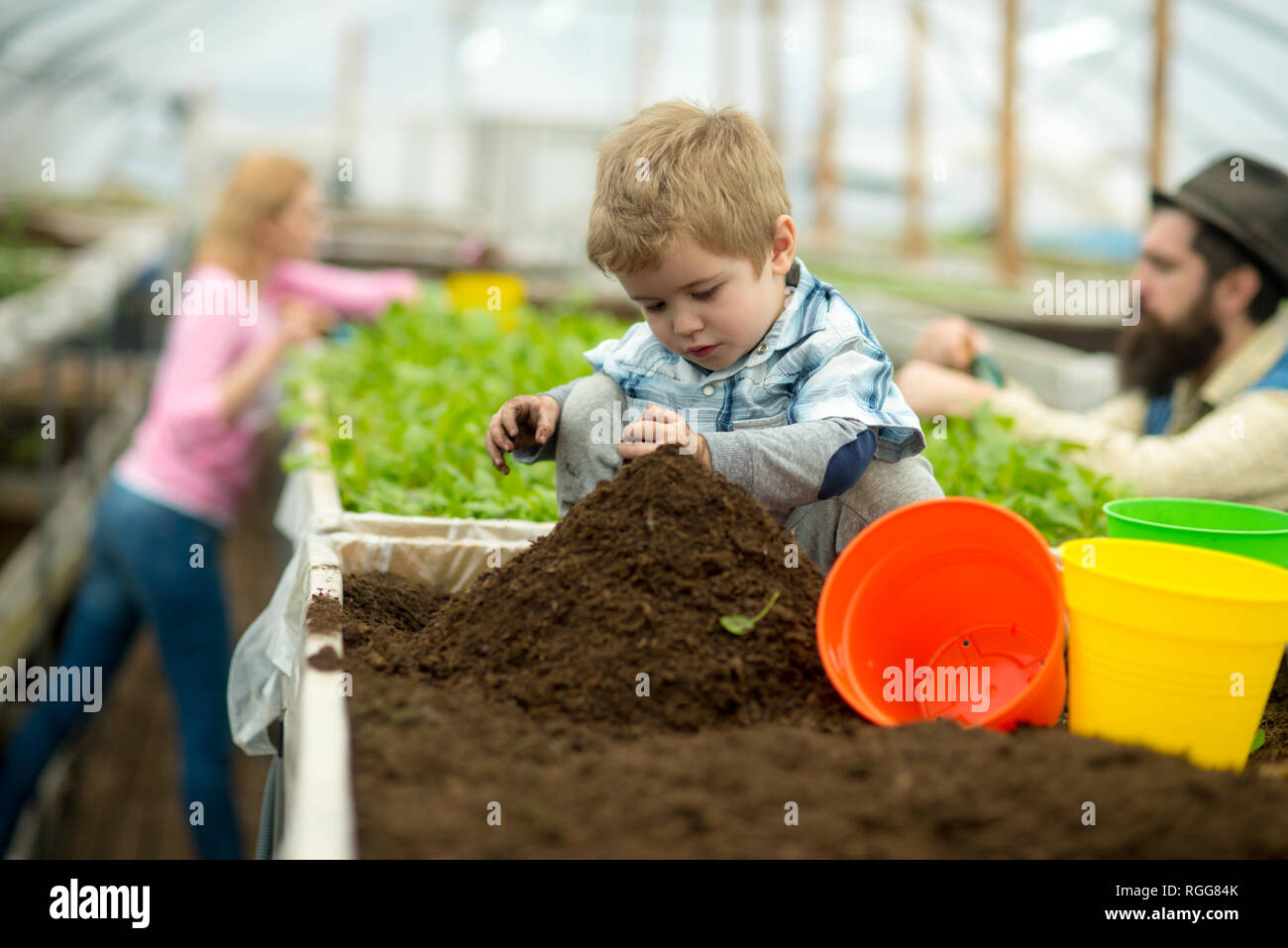 pure soil. pure soil enrichment. small boy work with pure soil. pure soil in greenhouse. gardening. - Stock Image