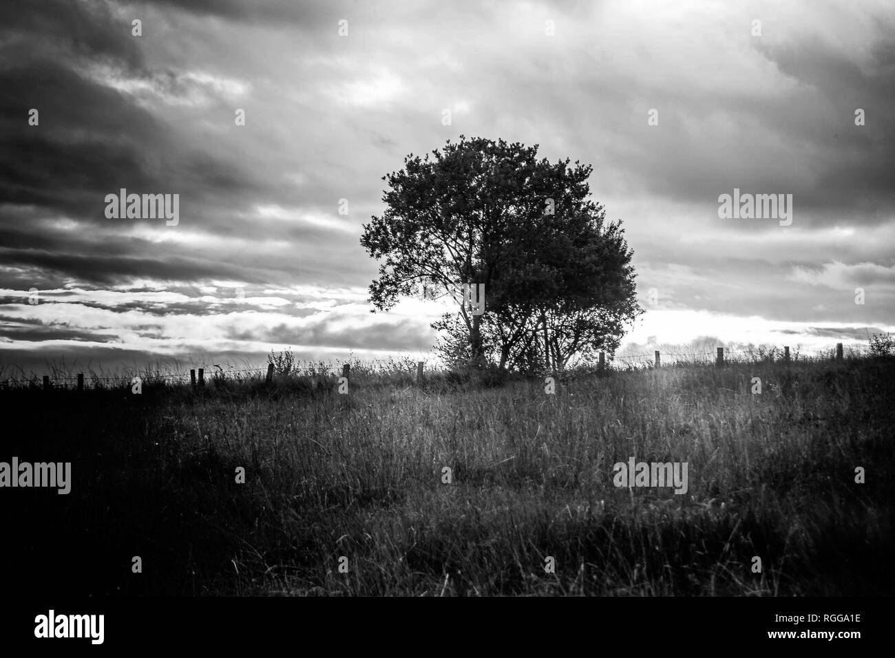 Dark landscape of an abstract tree in an open field with a cloudy bright sky. - Stock Image