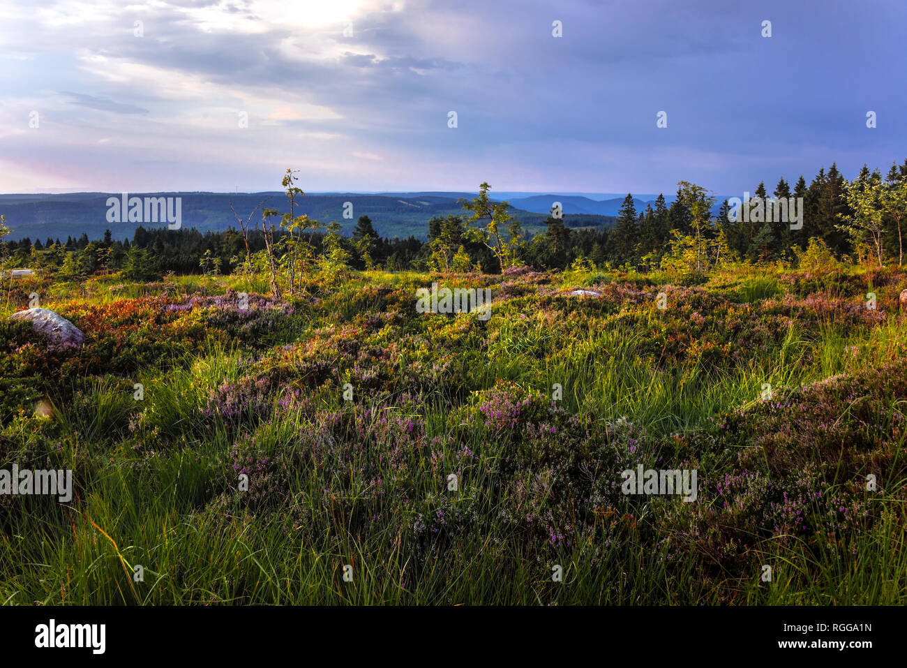 natural landscape and mountains of Northern Black Forest, Germany, mountain Schliffkopf Stock Photo