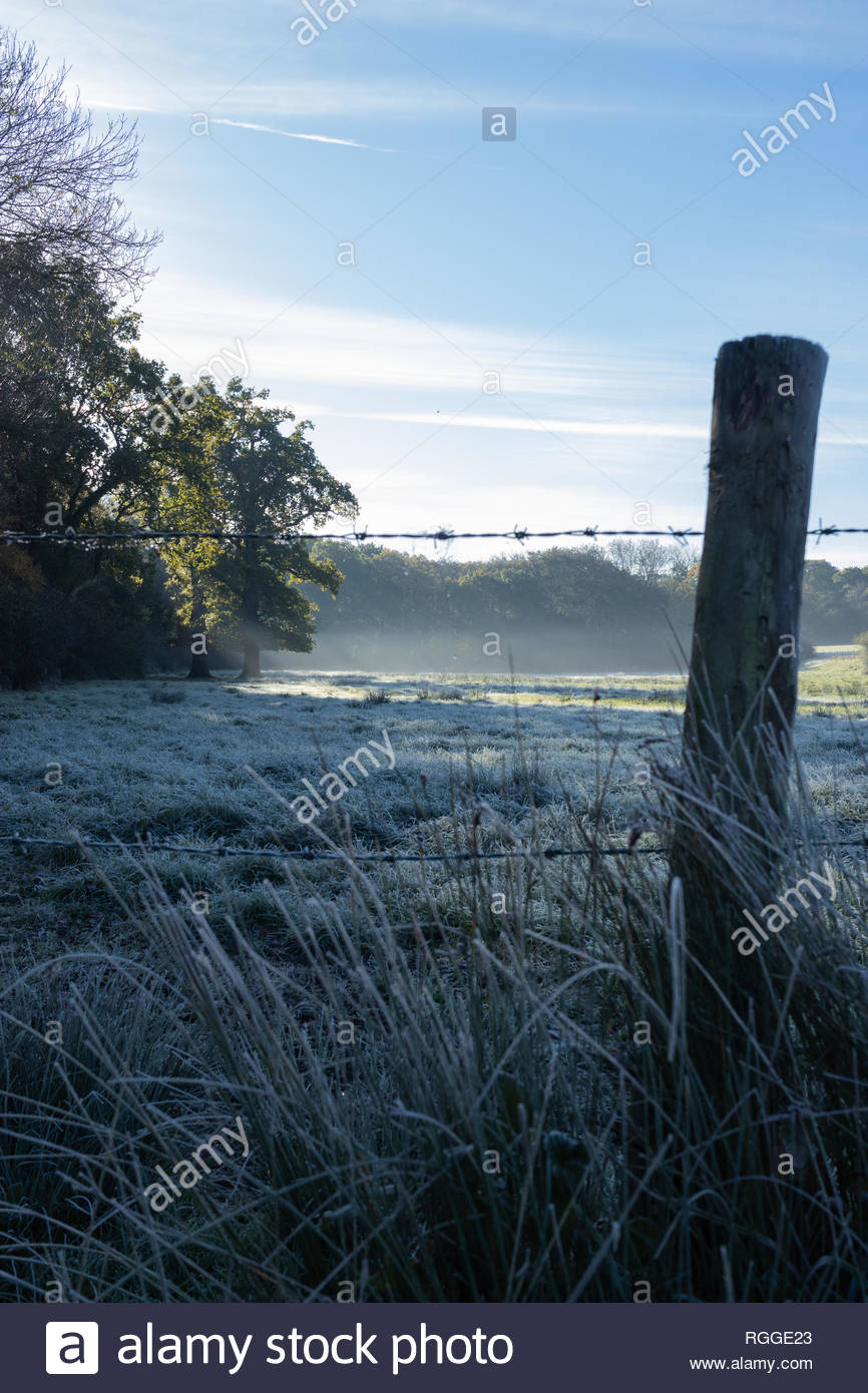 Morning countryside light shining through a tree onto a frosty field with barbed wire fence post and frost grass in the foreground Stock Photo