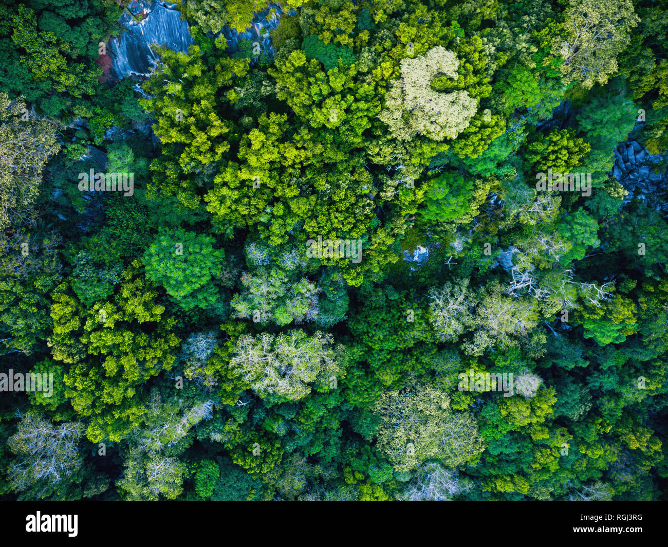 Seychelles, La Digue, Aerial view of rain forest - Stock Image