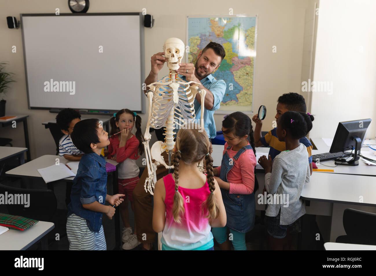 Male teacher explaining skeleton model in classroom of elementary school - Stock Image