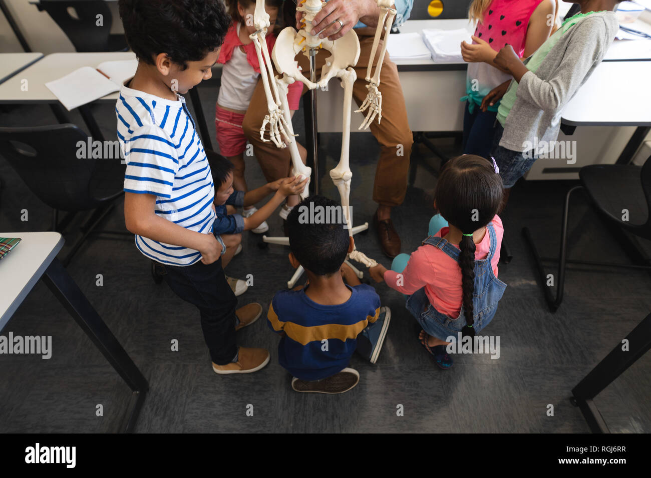 High angle view of schoolkids learning anatomy of human skeleton in classroom of elementary school - Stock Image